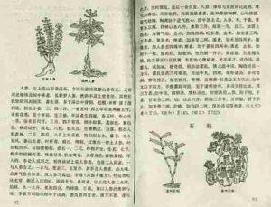 Shennong bencao ying