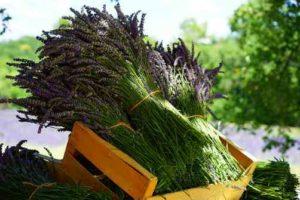aromaterapija osobna priča