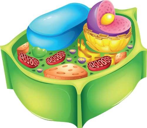 biljna stanica