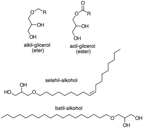 alkil gliceroli