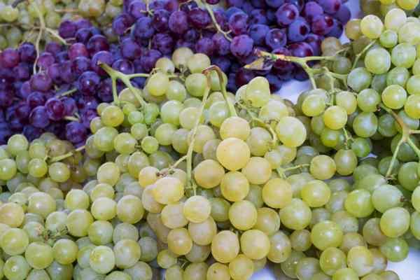 grožđe sjemenke