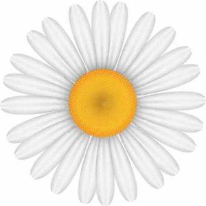 kamilica ilustracija