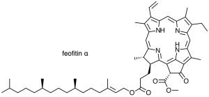 klorofil feofitin