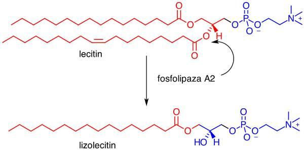 lizolecitin