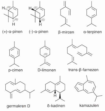 metaboliti pinena