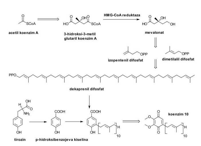 Q10 biosinteza