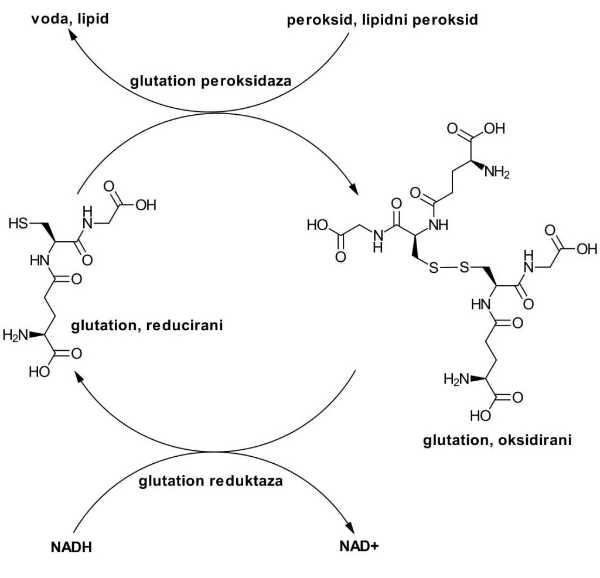 glutation-redukcija-oksidacija