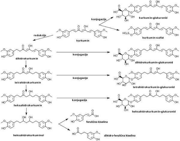 kurkumin-metabolizam