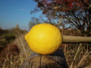 limun antioksidans